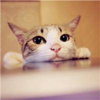 精選可愛貓咪唯美頭像十六張