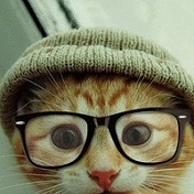 精选动物可爱猫咪头像十六张