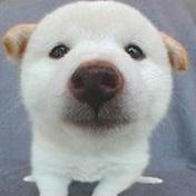 趣味可爱的动物搞笑表情头像精选